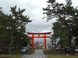 函館護国神社 マツ枝降ろし作業