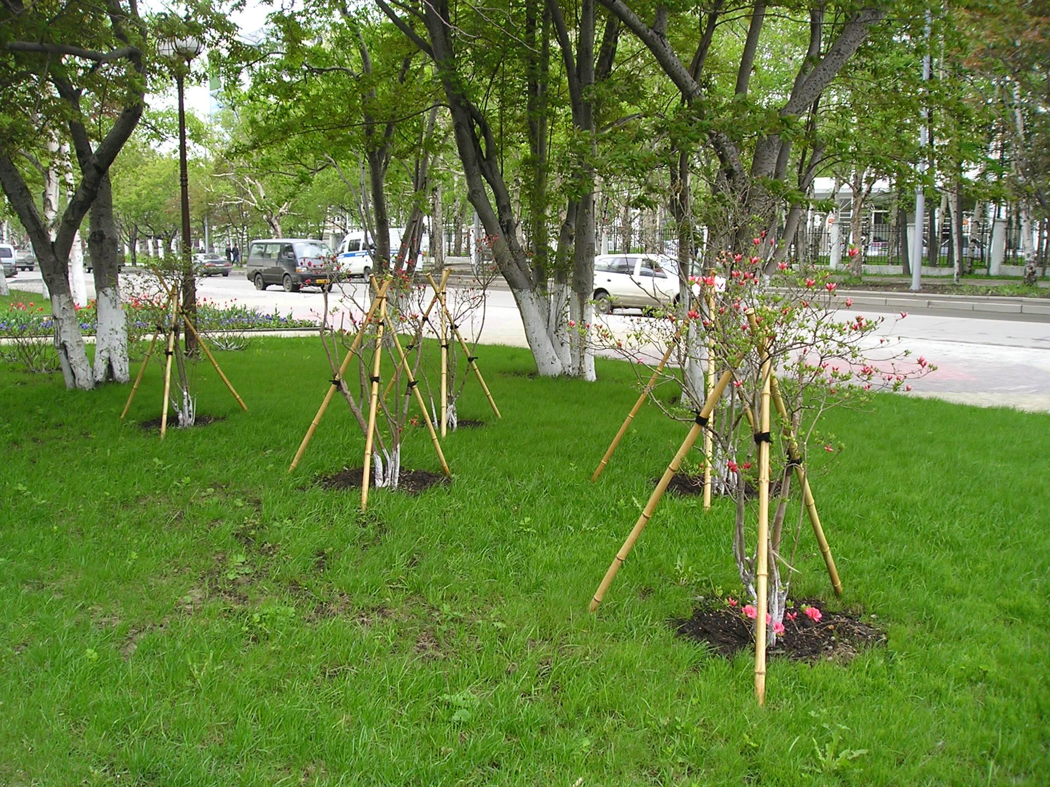 ロシア 記念植樹祭りでの和風緑化